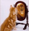 cat-lion-mirror-image